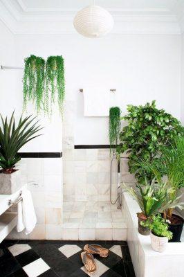 Chọn cây cảnh trong nhà tắm